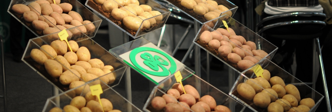 South Africa: Competition Commission pursues prosecution of seed potato supplier
