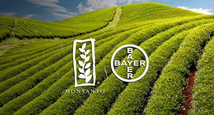 Brazil: Regulator urges conditions for approving Bayer-Monsanto tie-up