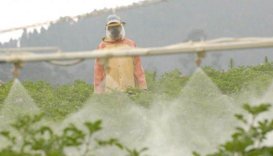 Estudio Sobre El Sector De Fertilizantes En Colombia