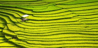 Mission Impossible? Promoting Sustainable Development Through China's Anti-Monopoly Law